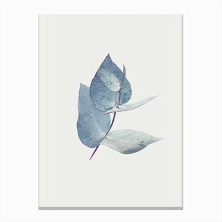 Eucalyptus I Canvas Print