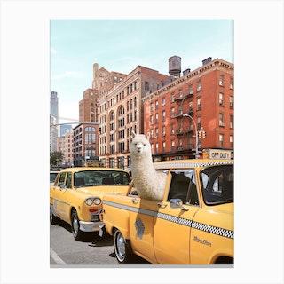 New York Alpaca Canvas Print