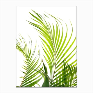 Palm Fronds In Canvas Print