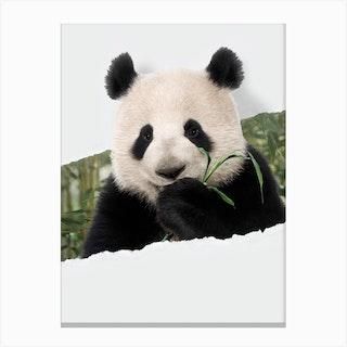 Panda Torn Paper Canvas Print