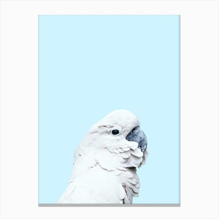 Blue Cockatoo Canvas Print