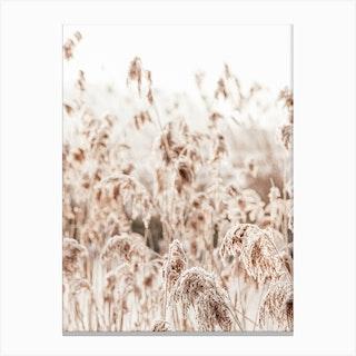 Wild Reeds Canvas Print