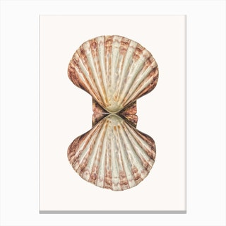 Shell VI Canvas Print
