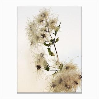 Florales · Plant End 9 Canvas Print