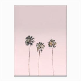 Blushing Palms Canvas Print