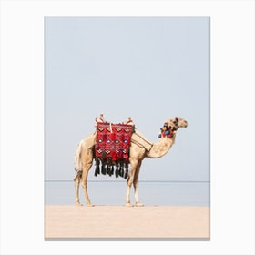 Camel in the desert Canvas Print