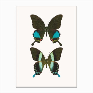 Butterflies II Canvas Print
