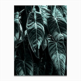 Wild Jungle Canvas Print