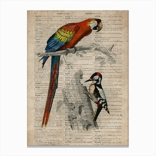 Parrot And Woodpecker Dictionnaire Universel Dhistoire Naturelle Canvas Print