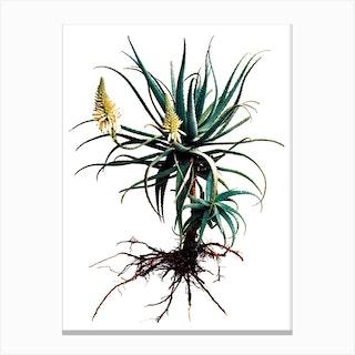 Whole Plant 01 Canvas Print