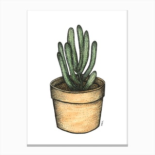Succulent In A Wooden Pot Canvas Print