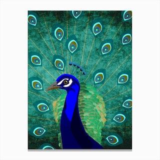 Illu Peacock Canvas Print