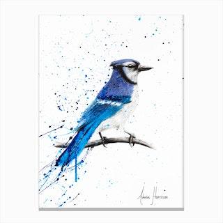 Blue Jay Sunday Canvas Print