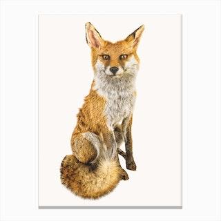 Animal III Canvas Print