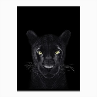 Panther on Black Canvas Print