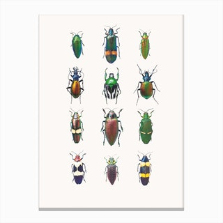 Insects III Canvas Print