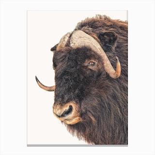 Animal II Canvas Print