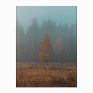 Lonely Birch Canvas Print