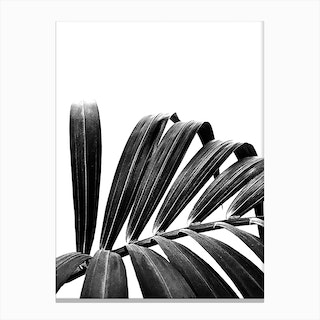 Palm Leaf 03 Canvas Print
