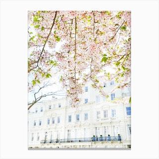 White London Blossom Canvas Print