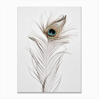 Peacock Feather 1 Canvas Print
