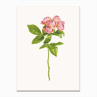 Roses IV Canvas Print
