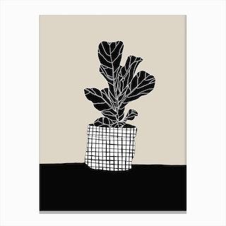 Ficus Lyrata Canvas Print