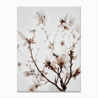 White Magnolia 1 Canvas Print