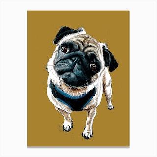 Teddy The Pug On Burnt Gold Canvas Print