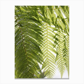 Plant Texture Green Canvas Print