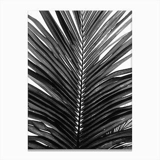 Palm Leaf 01 Canvas Print