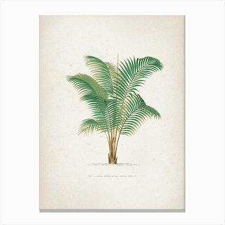 Vintage Kerchove 2 Les Palmiers 1 Canvas Print