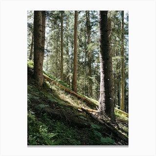 In To The Woods Canvas Print