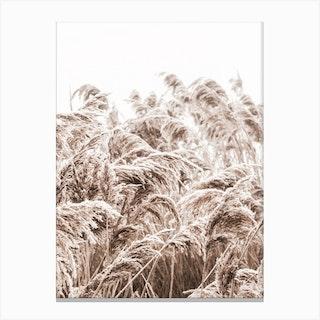 Golden Grass I Canvas Print