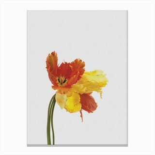 Tulip Still Life Canvas Print