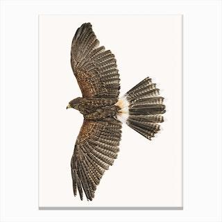 Birds IX Canvas Print