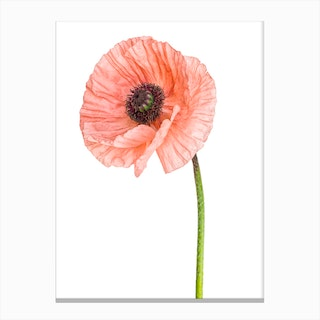Poppy Pink 01 Canvas Print
