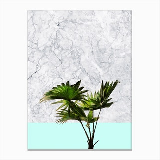 Palm Plant on Marble and Pastel Blue Wall Canvas Print
