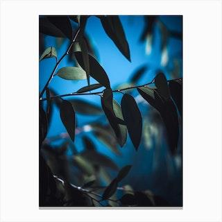 Dark Eucalyptus Canvas Print