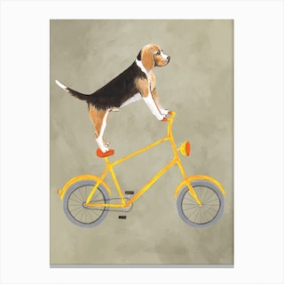 Beagle On Bicycle Canvas Print