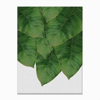 Banana Leaf I Canvas Print