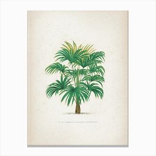 Vintage Kerchove 2 Les Palmiers 25 Canvas Print