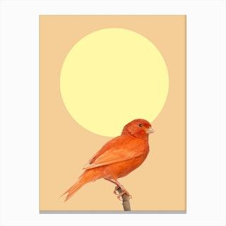 Japanese Sunbird Canvas Print