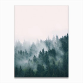 Fog And Forest Canvas Print