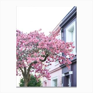 Pink Purple Blossom London Canvas Print