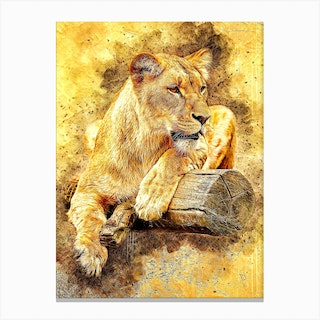 Lioness At Rest Canvas Print
