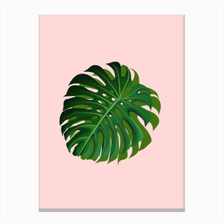 Pink Monstera Canvas Print
