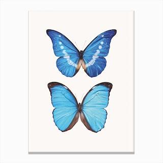 Butterflies V Canvas Print