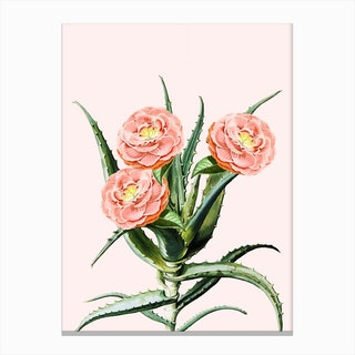 Blush Cactus V2 In Canvas Print
