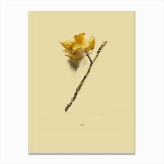 Botanico VII Canvas Print